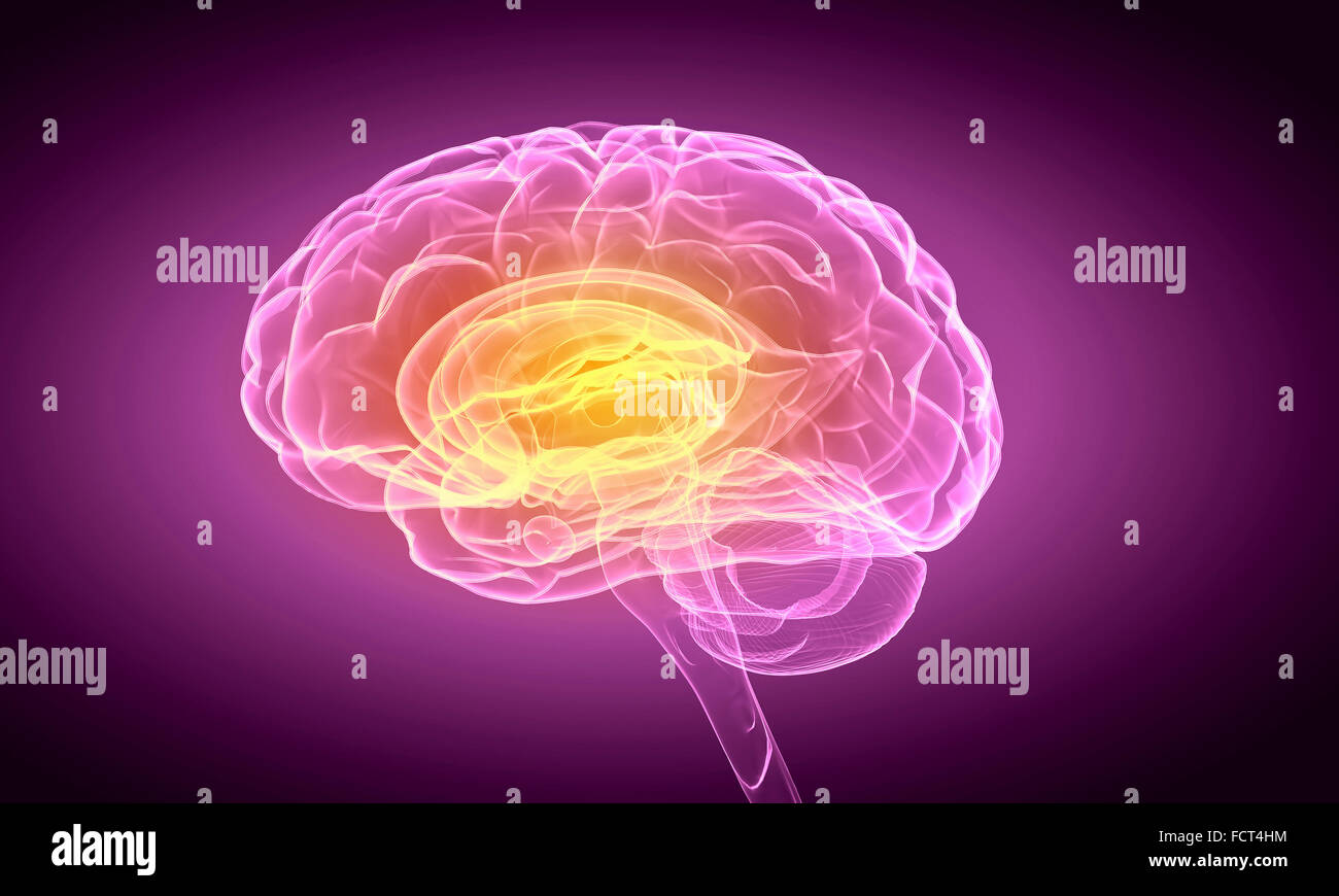 Science image with human brain on purple background - Stock Image