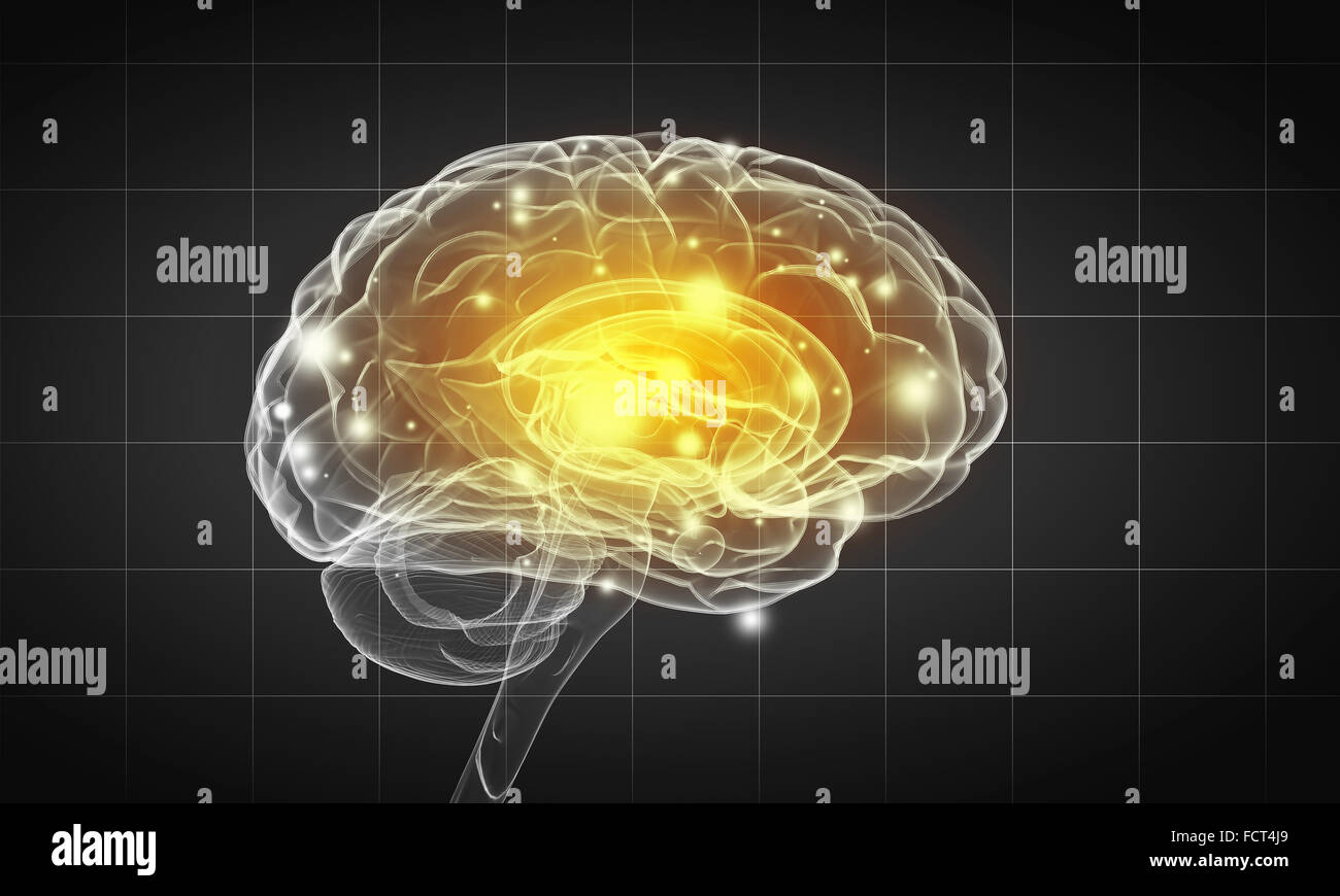 Science image with human brain on gray background - Stock Image