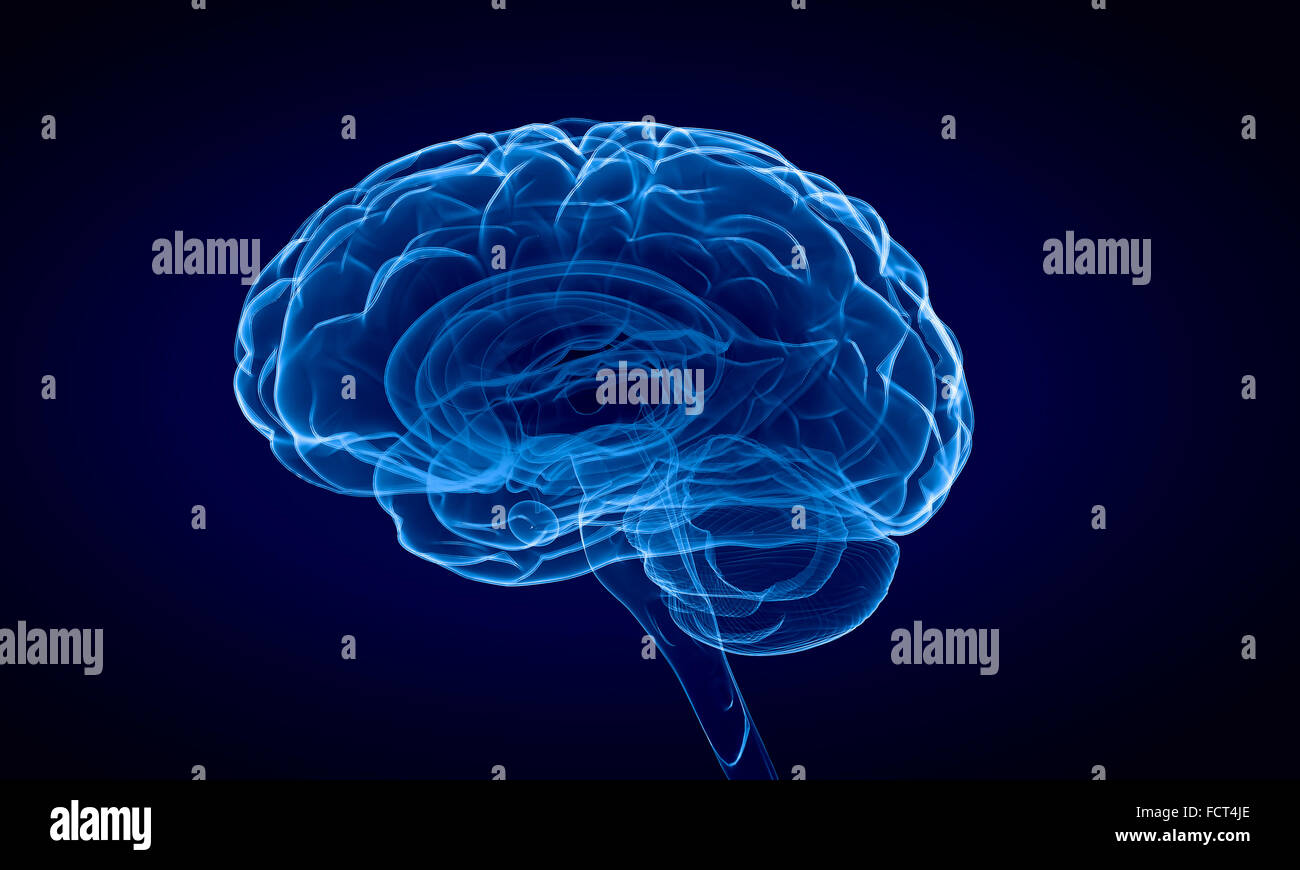Science image with human brain on blue background - Stock Image