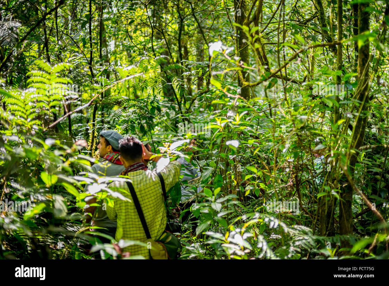 Rainforest trekking in Gede Pangrango National Park, Indonesia. © Reynold Sumayku - Stock Image