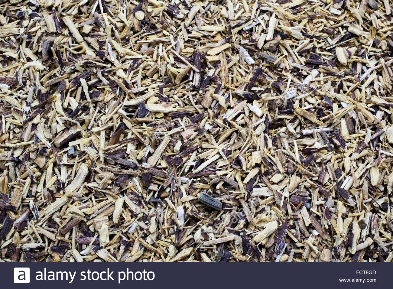Liquorice (licorice), Glycyrrhiza glabra, Lakritz, Sussholz — root used for flavoring and folk medicine. Stock Photo