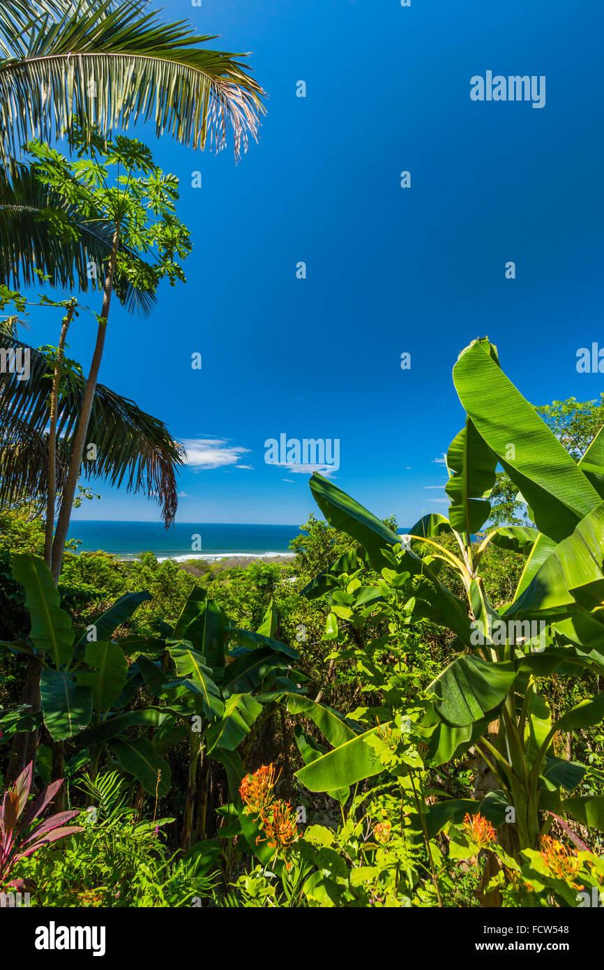Palm & banana trees on escarpment above this resort on south coast of Nicoya Peninsula; Santa Teresa, Puntarenas, - Stock Image