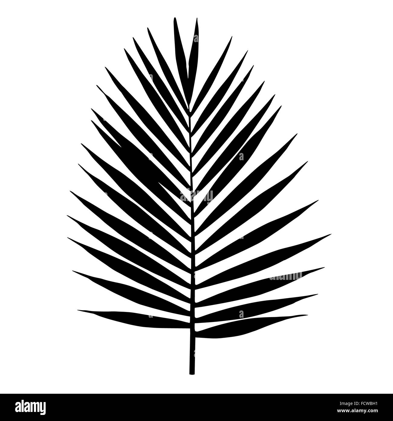 Palm Leaf Illustration Cut Out Stock Images Pictures Alamy