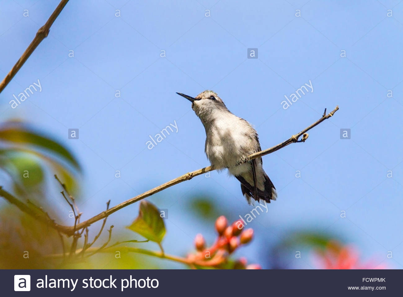 What is the smallest bird in the world