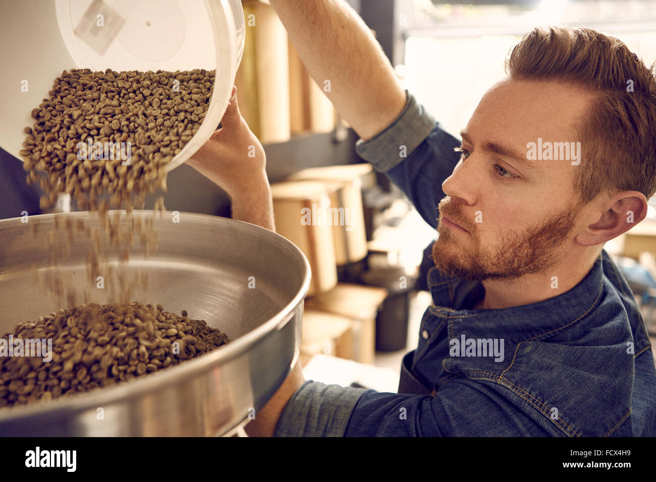 Man pouring coffee beans into a roasting machine - Stock Image