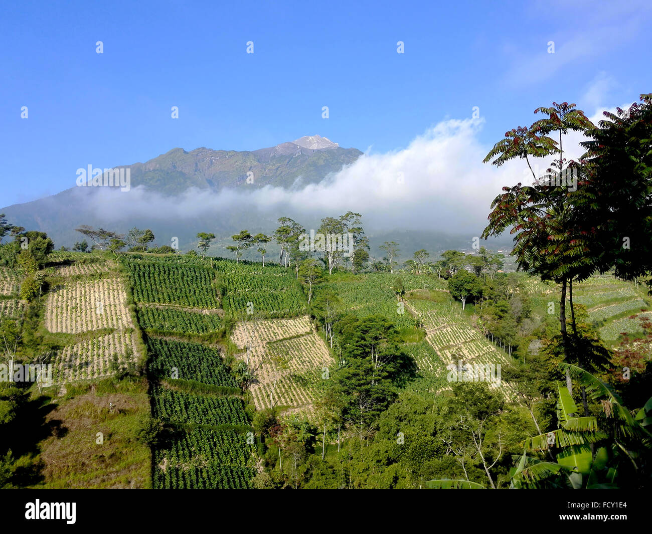 Indonesia Central Java Mount Merapi seen from the Ketep Pass  Adrian Baker - Stock Image