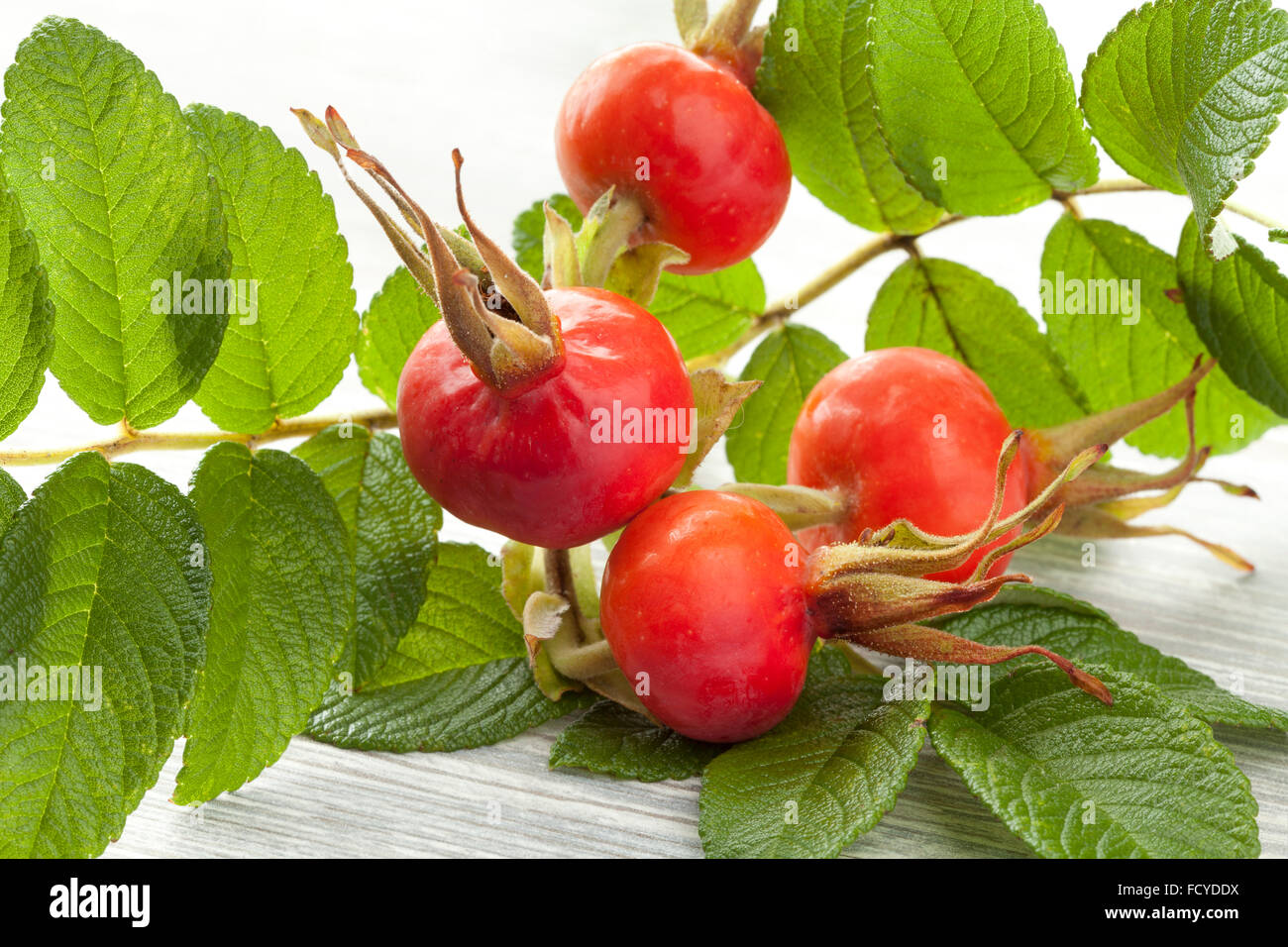 Twig of rose hips and leaves - Stock Image