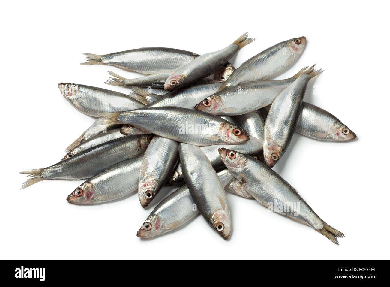 Fresh raw European sprats on white background - Stock Image