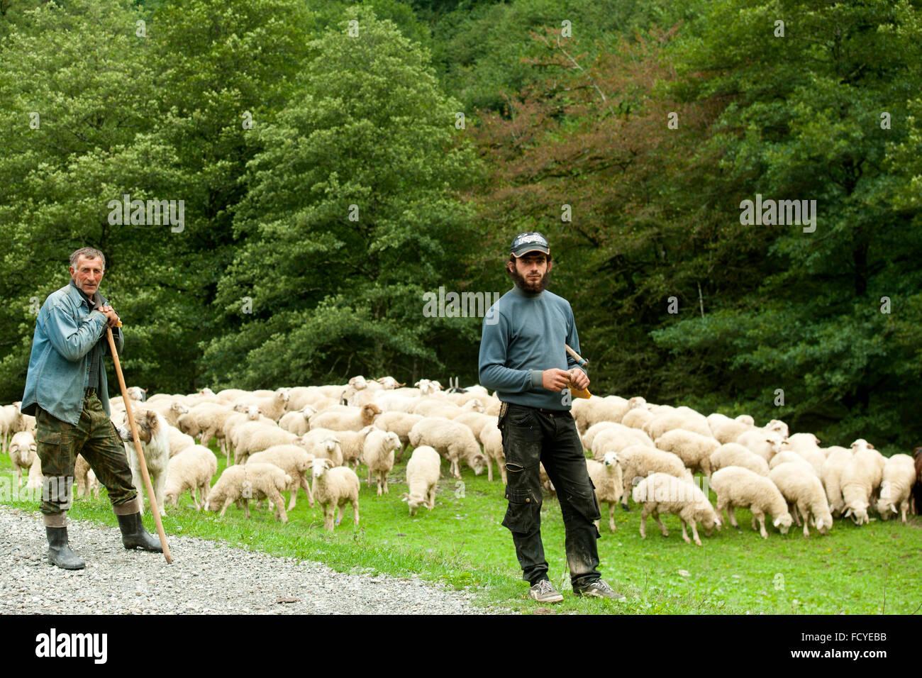 Georgien, Kachetien, Schafherde mit Schäfern im Tal des Flusses Stori an der Strasse zur Bergregion Tuschetien - Stock Image