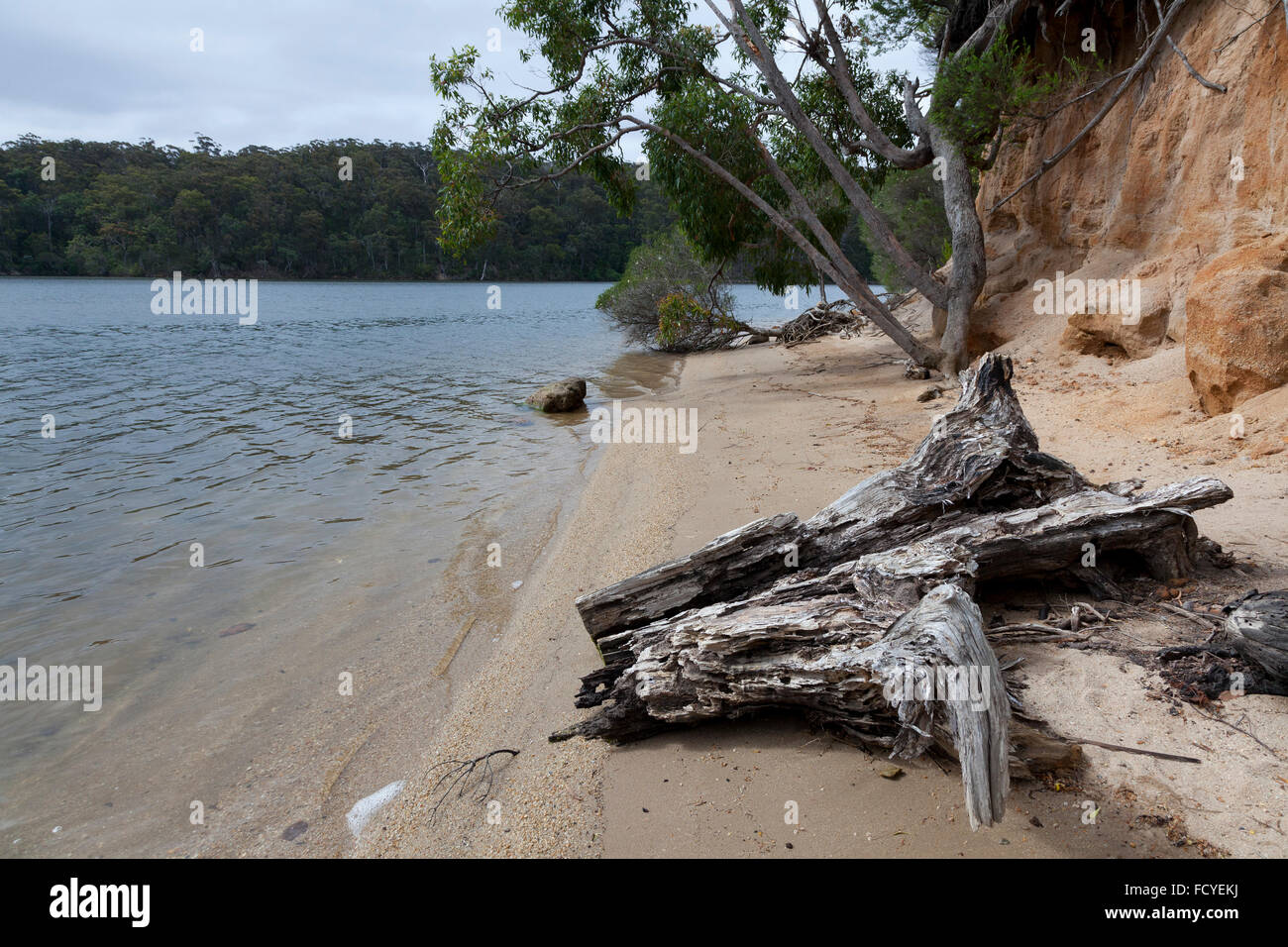 Trunk and trees at the Mallacoota Inlet, Gippsland, Australia - Stock Image