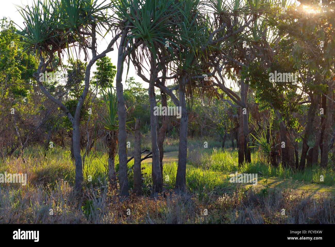 Sundown inTyto Wetlands, Queensland,Australia - Stock Image
