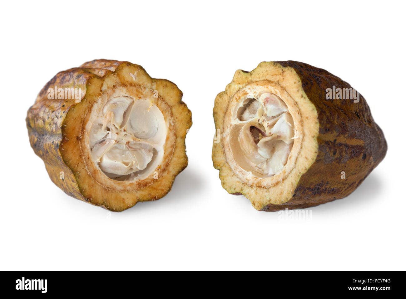 Cocoa beans in a cacao pod on white background - Stock Image