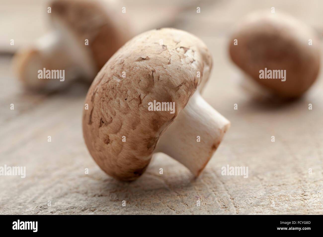 Fresh chestnut mushroom close up - Stock Image
