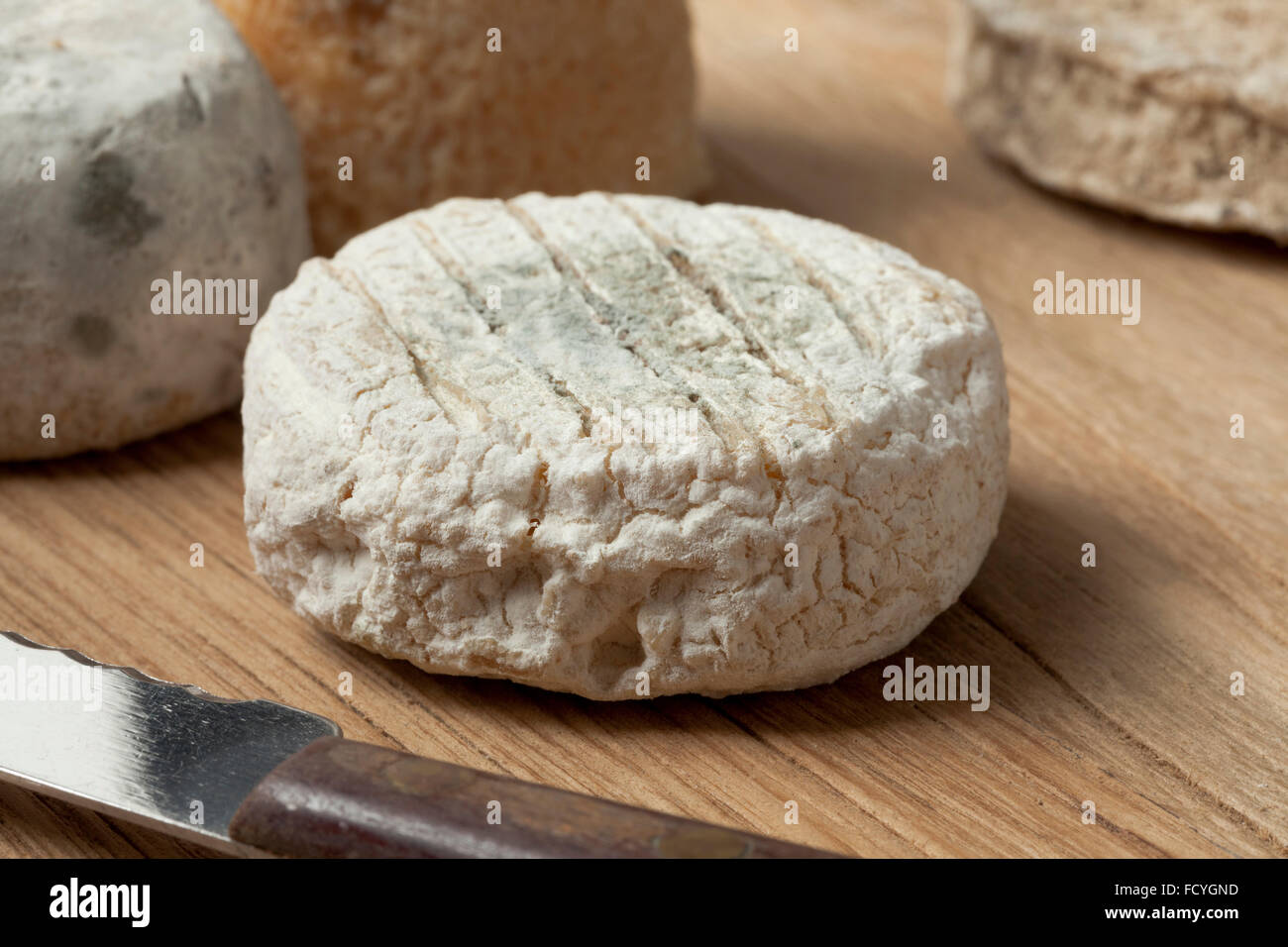 Traditional french goats cheese called chevre d'or - Stock Image