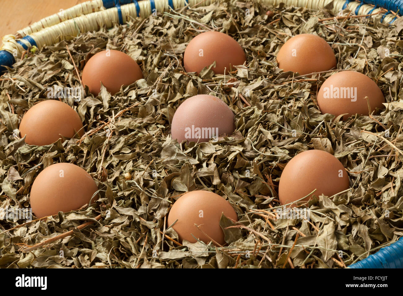Eggs in a basket with dried henna leaves as a symbol for a Moroccan wedding party - Stock Image