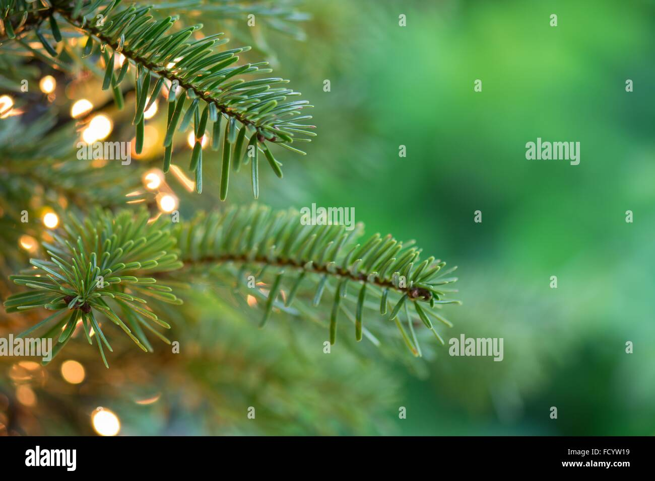 Fresh Green Christmas Tree Close Up Background With Copy Space