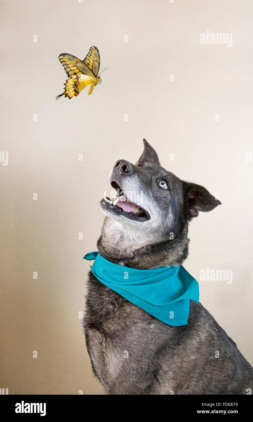 The dog and butterfly - Stock Image