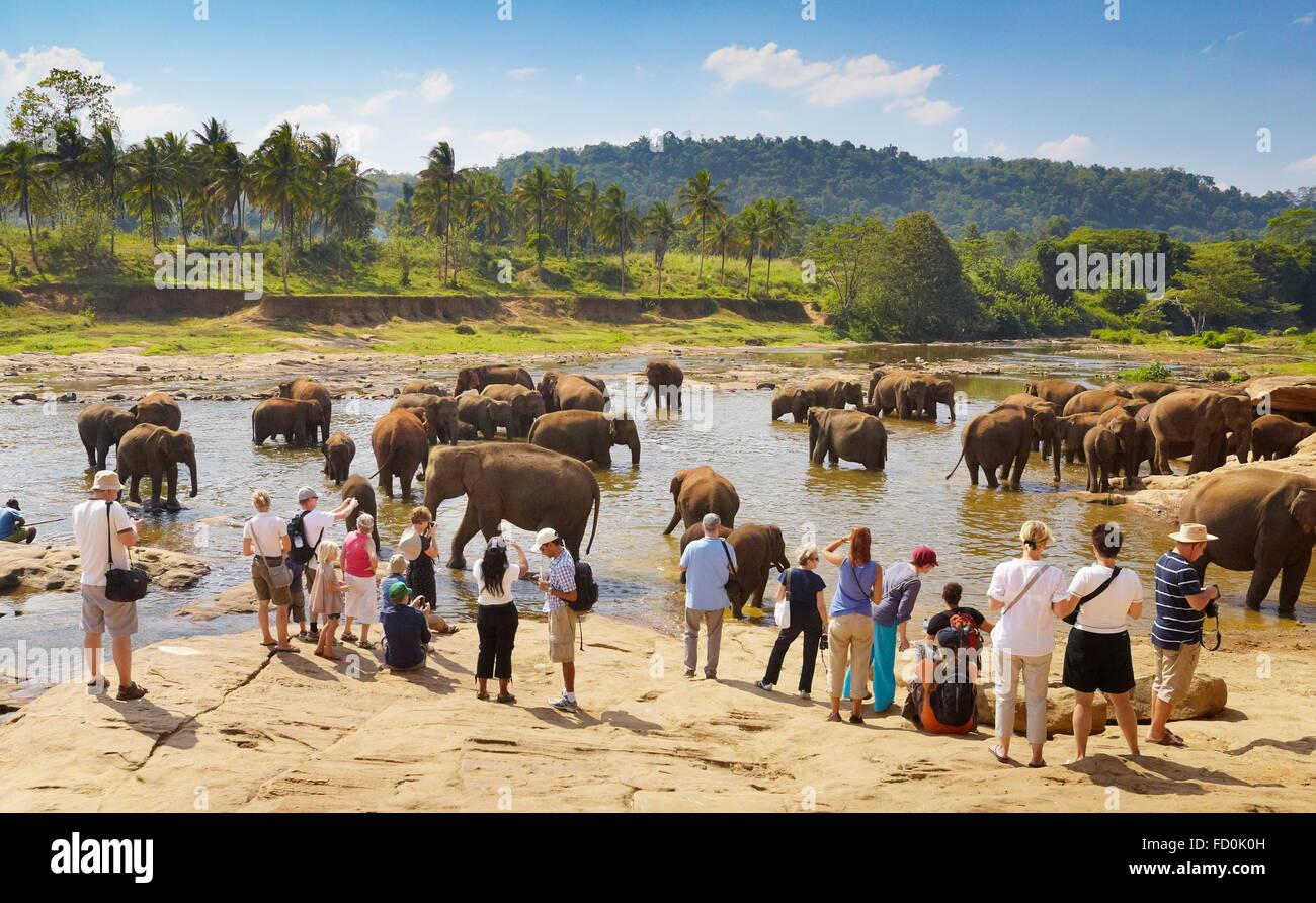 Sri Lanka - tourists watching elephants taking bath in the river, Pinnawela Elephant Orphanage for wild Asian elephants - Stock Image