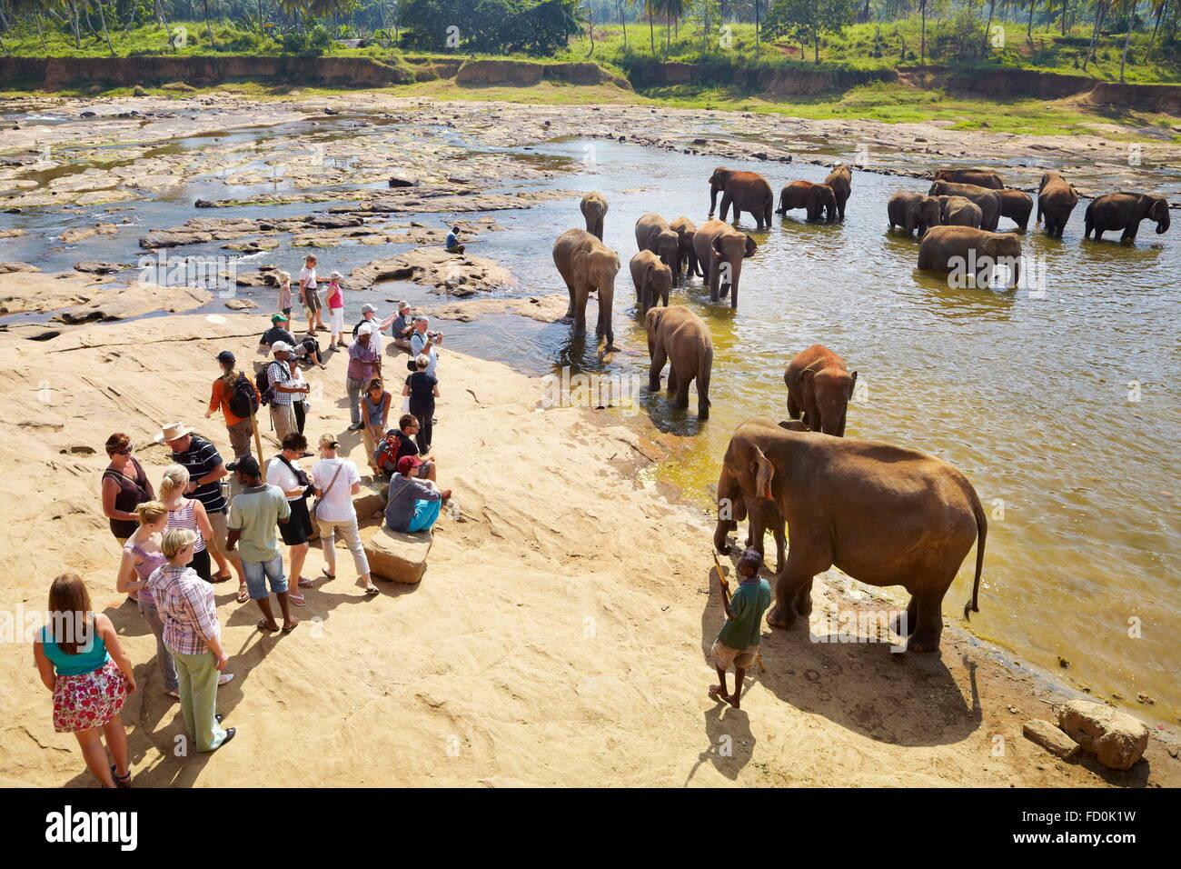 Sri Lanka - tourists looking at elephant bath, Pinnawela Elephant Orphanage for wild Asian elephants - Stock Image
