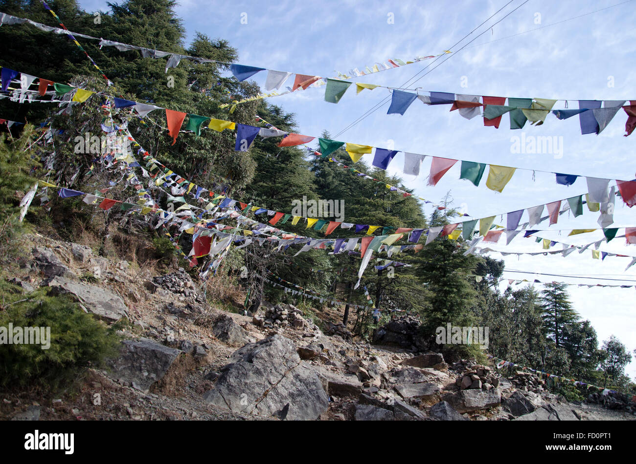Prayer flags, Dharamsala, Himachal Pradesh, India - Stock Image
