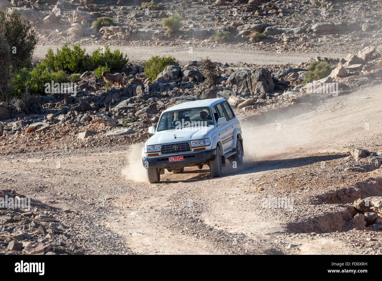 Tourist Guide with his offroad car in Oman - Stock Image