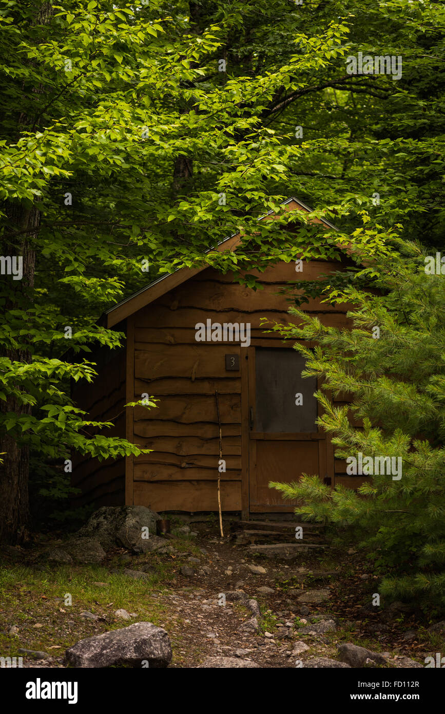 A small cabin in the Maine woods surrounded by trees. - Stock Image