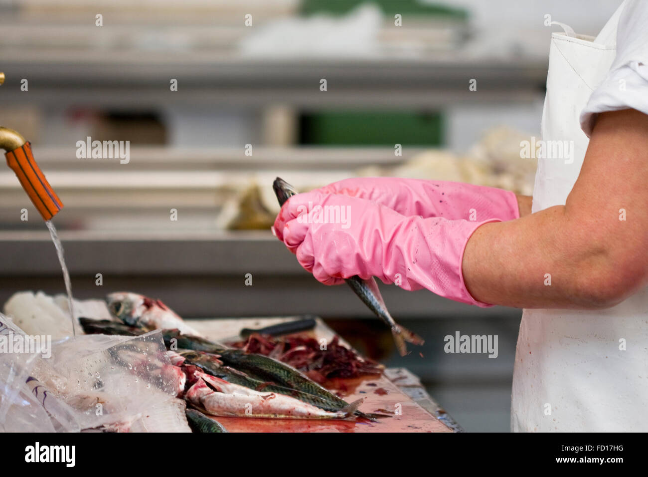 Cleaning and filleting a fresh caught saltwater fish - Stock Image