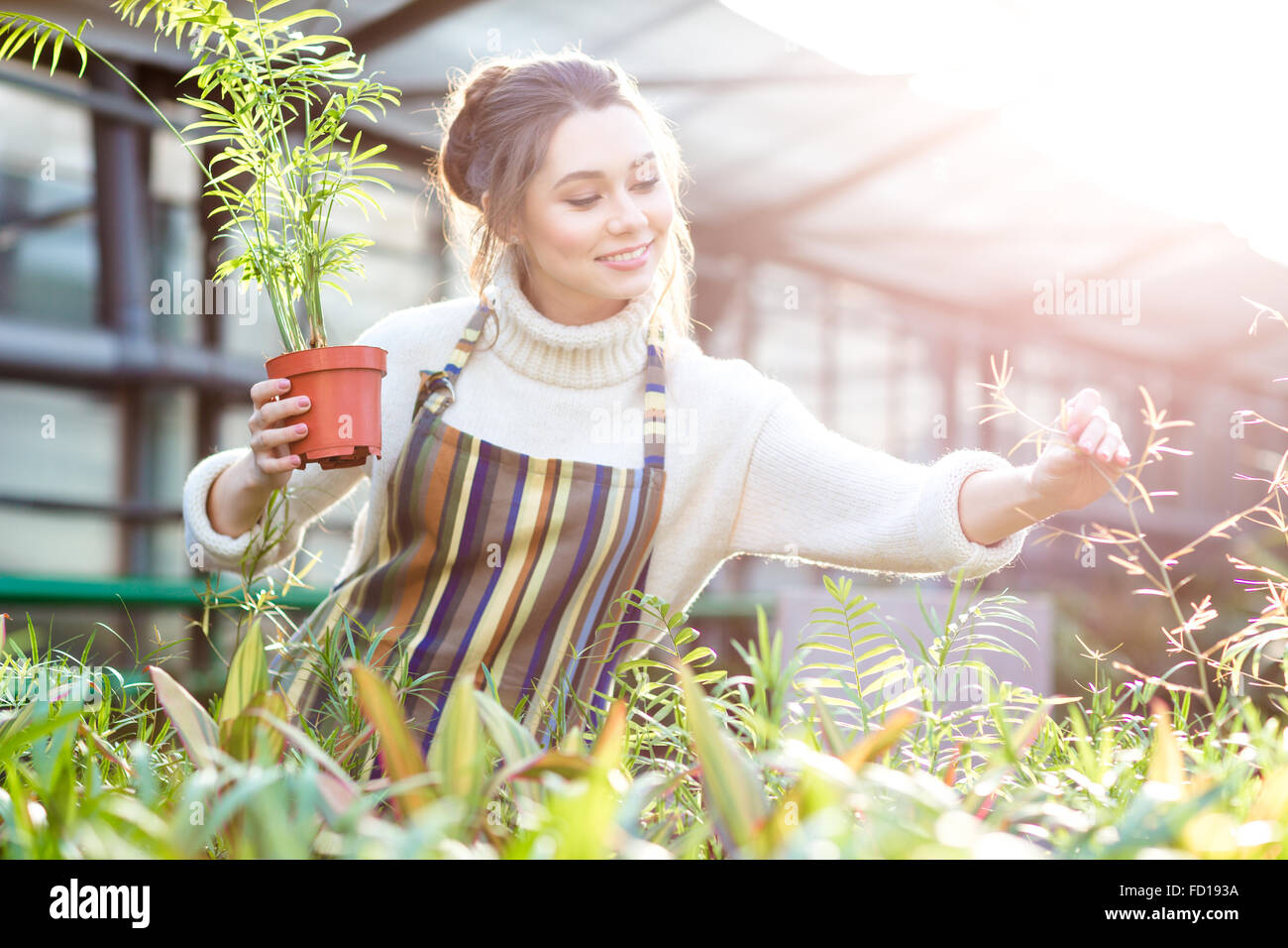 Smiling beautiful young female gardener in white sweater and striped apron taking care of plants and flowers in Stock Photo