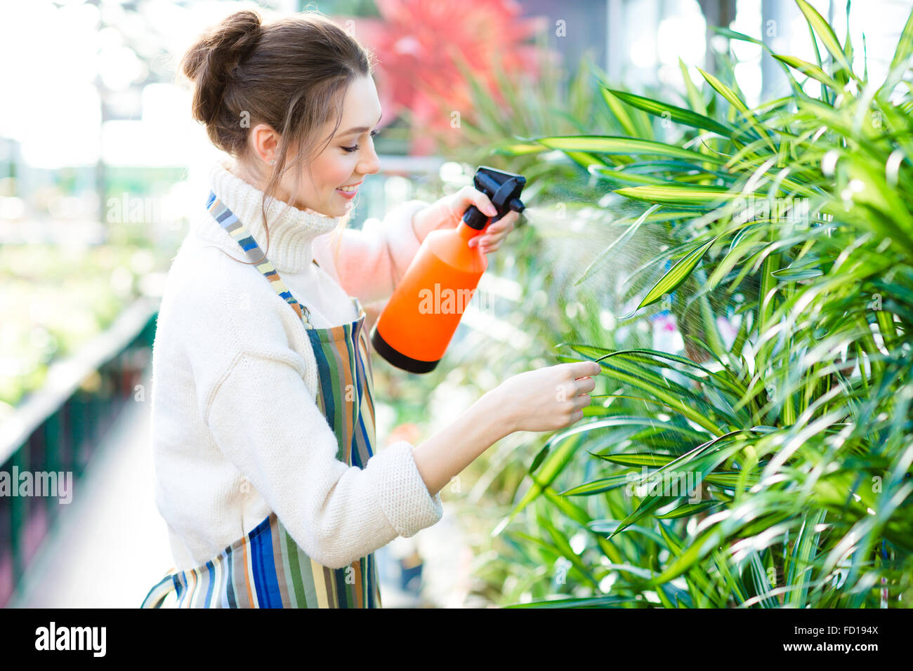 Beautiful cheerful young woman gardener in colorful apron spraying flowers and plants using water pulverizer in Stock Photo