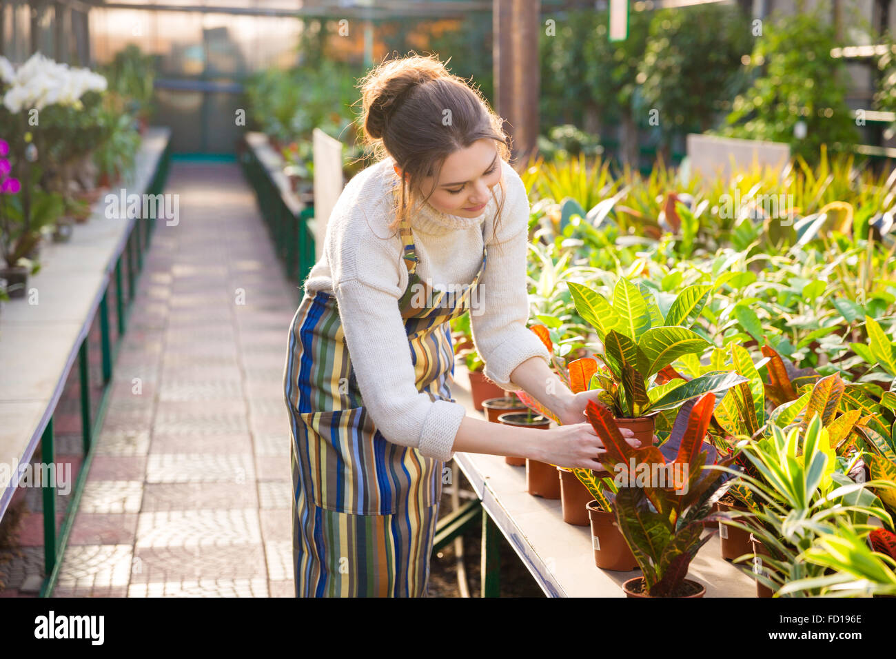 Cute lovely young woman gardener in apron working and taking care of flowers in pots in greenhouse Stock Photo