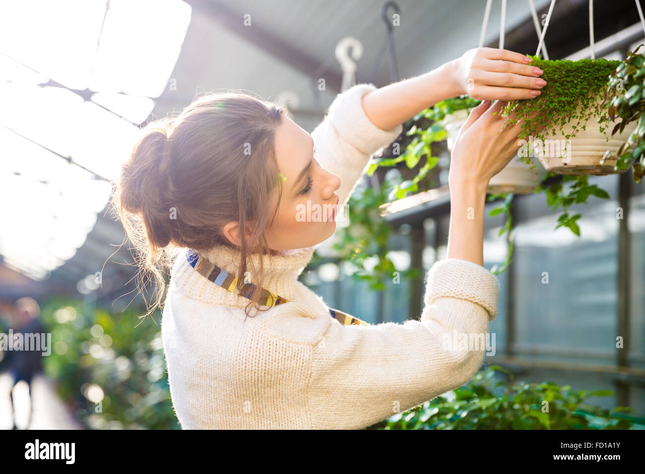 Tender pretty female gardener working with plants and flowers in garden center - Stock Image