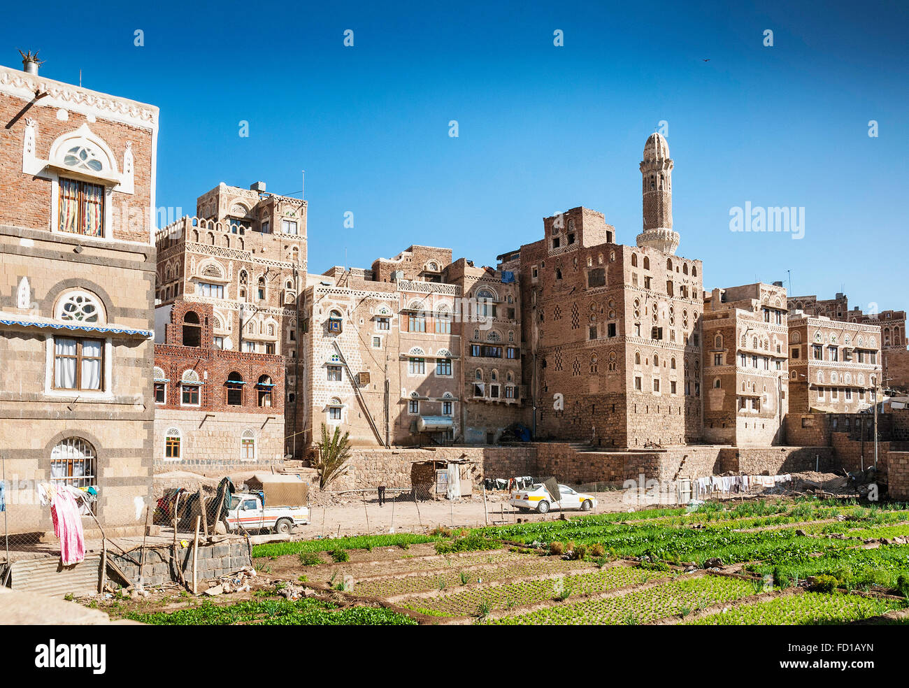 urban vegetable garden in sanaa city old town yemen - Stock Image