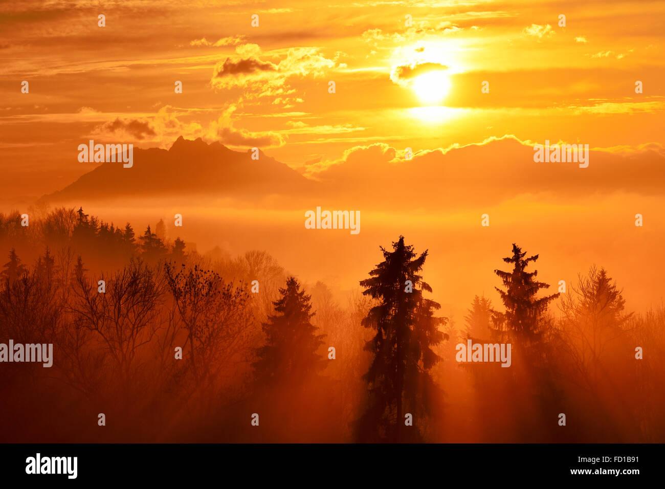 Sun rays shining through foggy spruce forest, Pilatus behind, Baar, Canton of Zug, Switzerland - Stock Image
