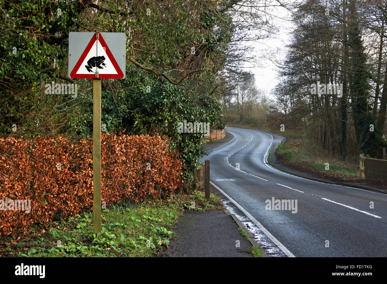 English street sign warning of toads or frogs in the road - Stock Image