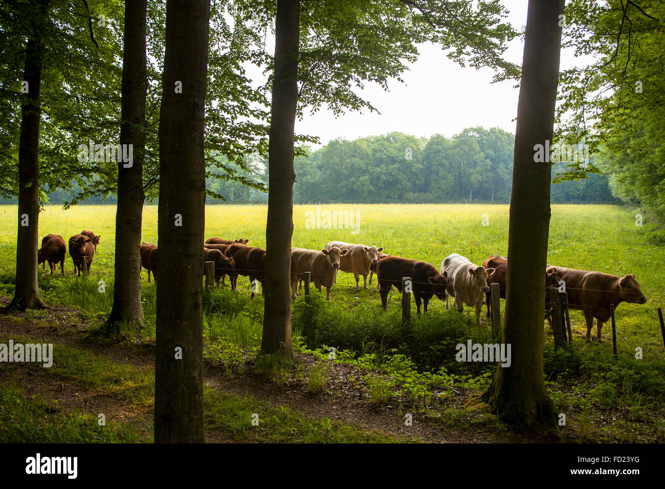 Europe, Germany, North Rhine-Westphalia, Lower Rhine Region, alley at the river Issel near Wesel. - Stock Image