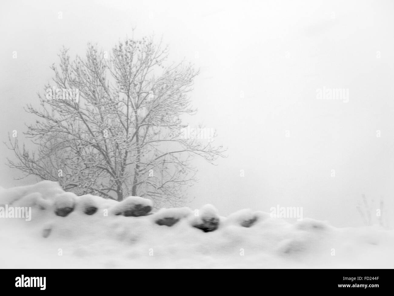 a stone wall and bare tree on the roadside covered in snow in a low poor visibility blizzard, high key - Stock Image