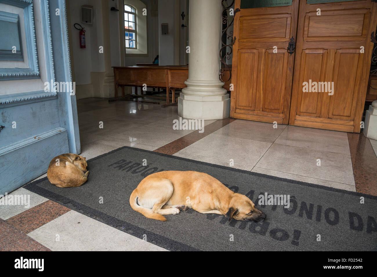 Dogs sleeping in front of Catedral Metropolitana, Santo Antonio Cathedral, Diamantina, Minas Gerais, Brazil - Stock Image