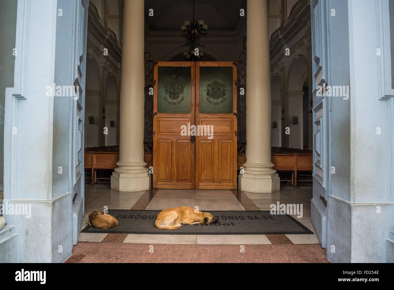 Dogs sleeping in front of, Catedral Metropolitana, Santo Antonio Cathedral, Diamantina, Minas Gerais, Brazil - Stock Image