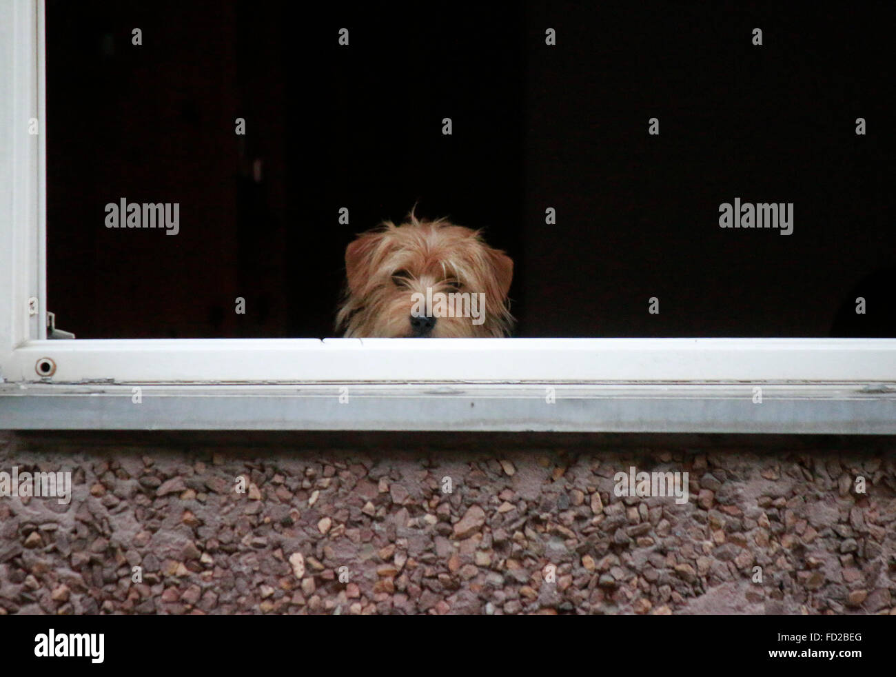 Hund , Berlin. - Stock Image
