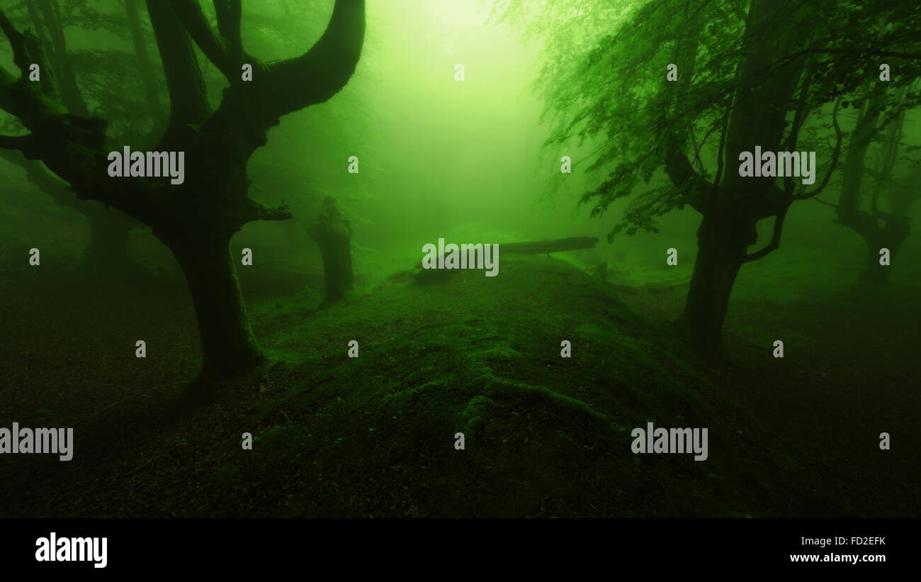 deep scary forest with gloomy trees silhouette - Stock Image