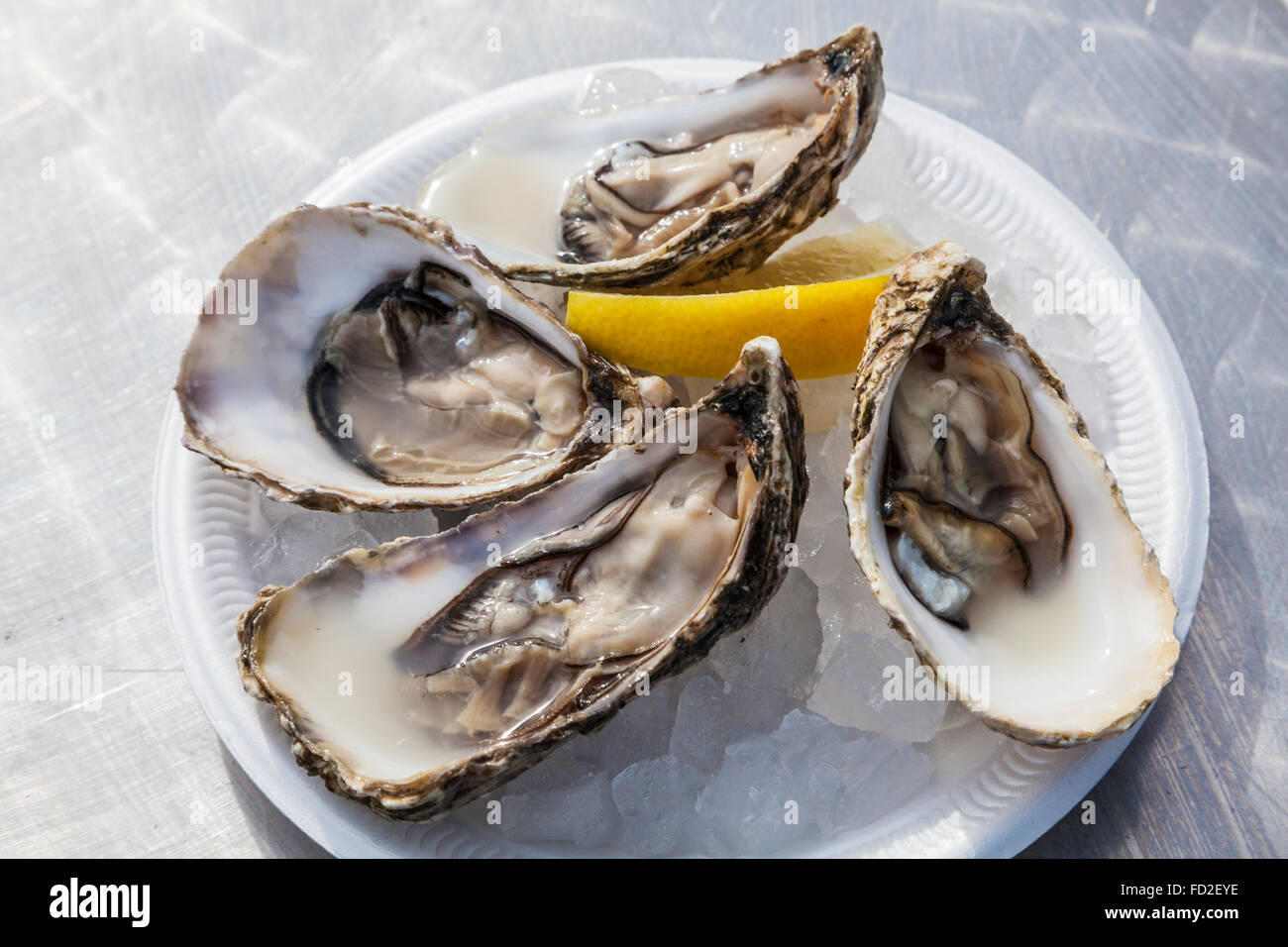 A plate of open oysters served in the traditional way over ice with a wedge of lemon. - Stock Image
