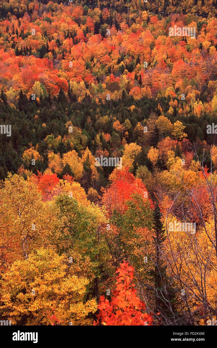 Bright fall color,Gaspe Peninsula,Quebec - Stock Image
