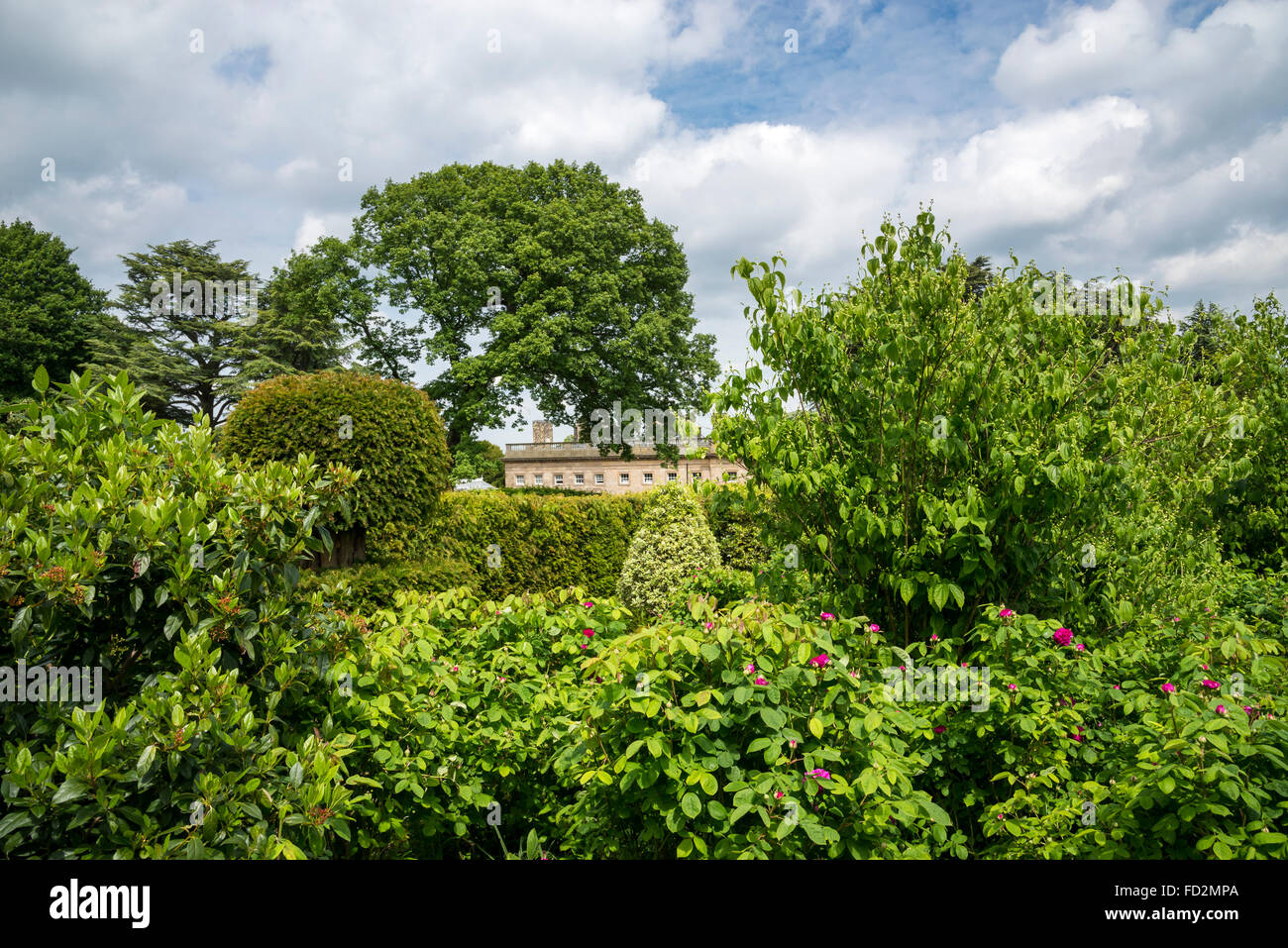 Wentworth castle house seen through lush summer greenery in the gardens. - Stock Image