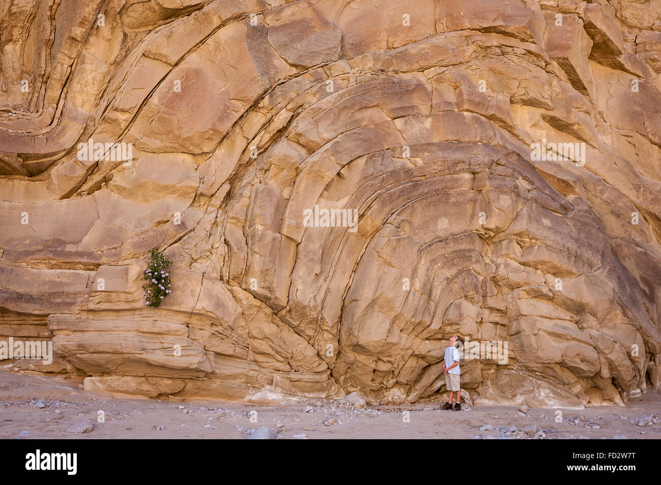 Young boy looking up at rock formation in Fish Creek Wash, Anza-Borrego Desert State Park, California, USA. - Stock Image