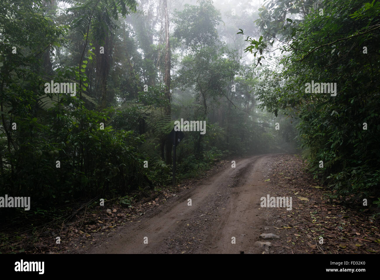 A road passing through a rainforest - Stock Image
