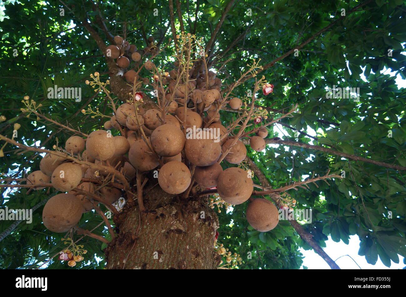 Canon Balls Stock Photos & Canon Balls Stock Images - Alamy