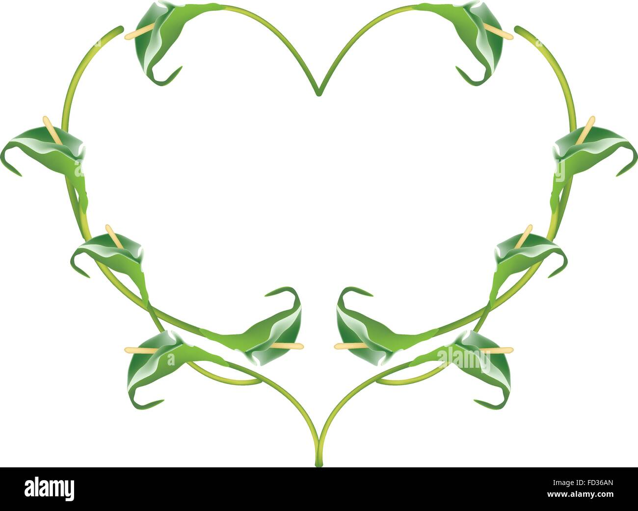 Love Concept, Illustration of Green Anthurium Flowers or Flamingo Flowers Forming in Heart Shape Isolated on White - Stock Vector
