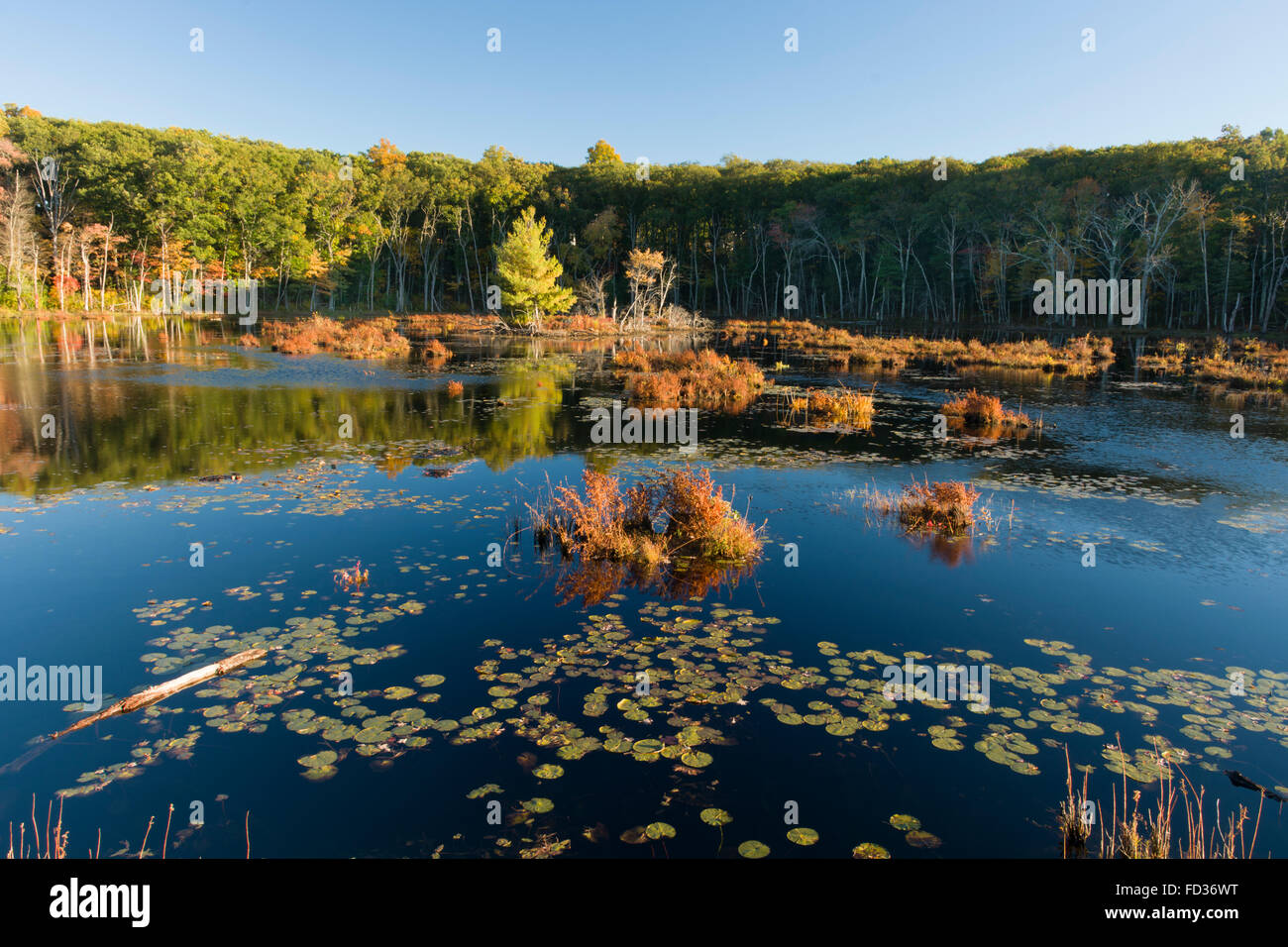 Fall colors in Harold Parker State Forest, Andover, Massachusetts - Stock Image