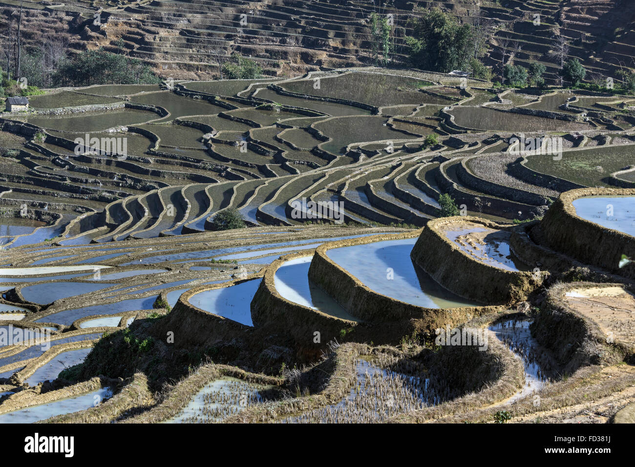 Centuries old rice terraces in the early morning, Duoyishi, Yunnan Province, China Stock Photo