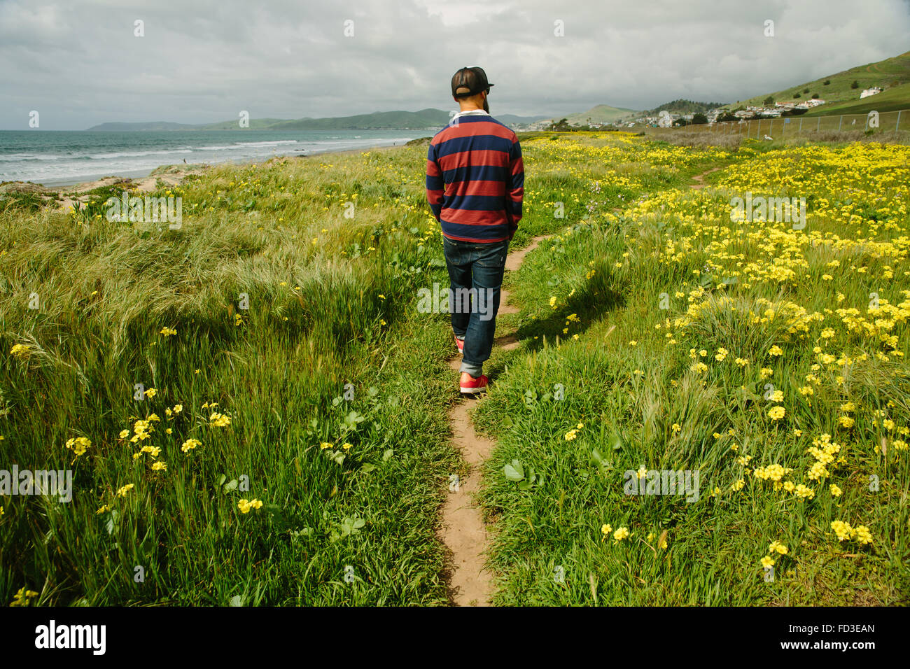 A man walks among the yellow flowers along the shoreline of Big Sur, California. - Stock Image
